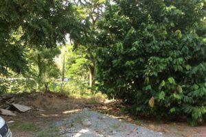 Lot 15 - Castle Comfort, Dominica